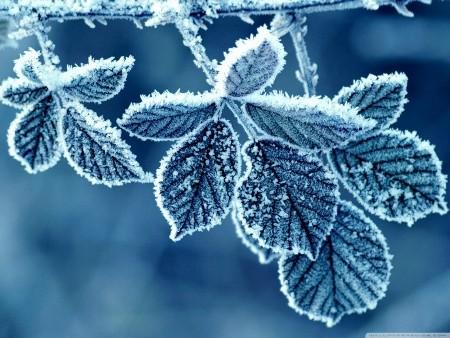 Photo of سبب تسمية المربعانية بهذا الاسم , مميزات موسم المربعانية
