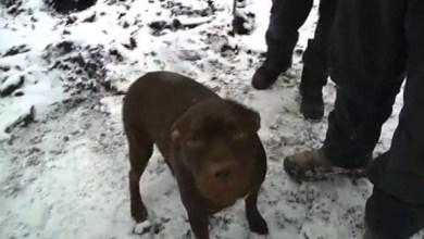 Photo of كلب ينقذ أسرة من الموت حرقاً في منزلها