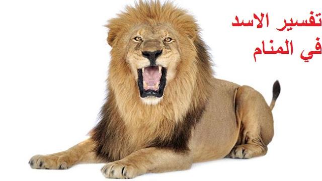 رؤية الأسد النمر في الحلم مجلة رجيم