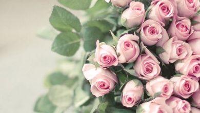 Photo of أجمل صور ورود ملونة , ورود رومانسية للاهداء , أجمل ورود الحب في العالم