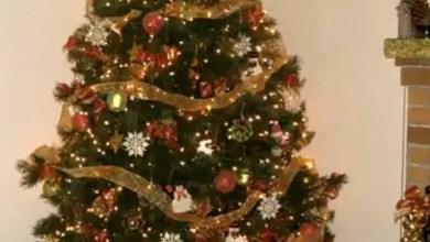 Photo of تفاصيل منع دخول شجرة الكريسماس الى السعودية