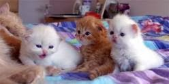 Photo of طعام القطط الصغيرة حديثة الولادة