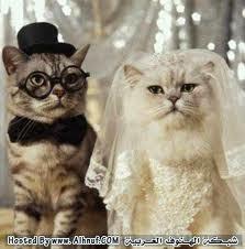 Photo of تربيه القطط المنزلية