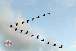 Photo of قصص قصيرة جدا: قصة منطق الطير: خورخي لويس بورخيس(الأرجنتين)