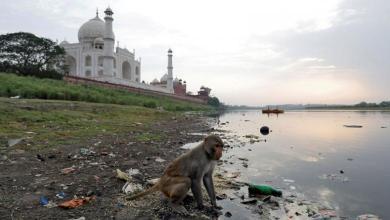 Photo of الهند: الشرطة تطارد القردة في تاج محل بالمقلاع