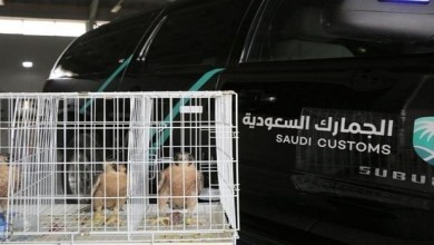 Photo of السعودية.. إحباط تهريب صقور بأغرب طريقة!