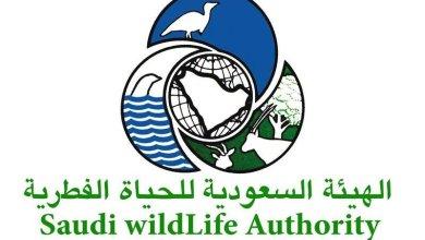 Photo of تفاصيل إلغاء الهيئة العامة للأرصاد و الحياة الفطرية السعودية