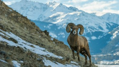 Photo of حيوانات الجبال