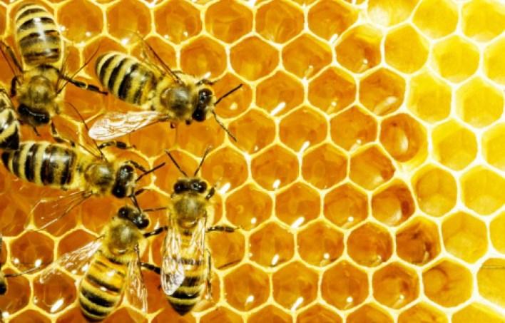 فوائد غذاء ملكات النحل