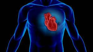 Photo of علامات وأعراض تضخم القلب