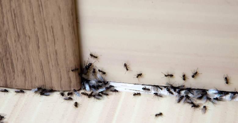 Photo of أفضل الطرق للتخلص من النمل