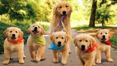 Photo of انواع الكلاب وأسعارها