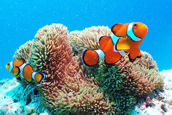 عالم الحيوانات البحرية