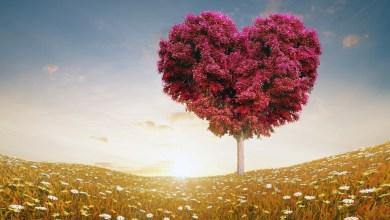 Photo of أجمل كلام الحب