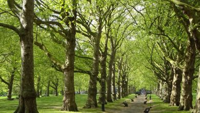 Photo of ماهي أنواع الأشجار ؟
