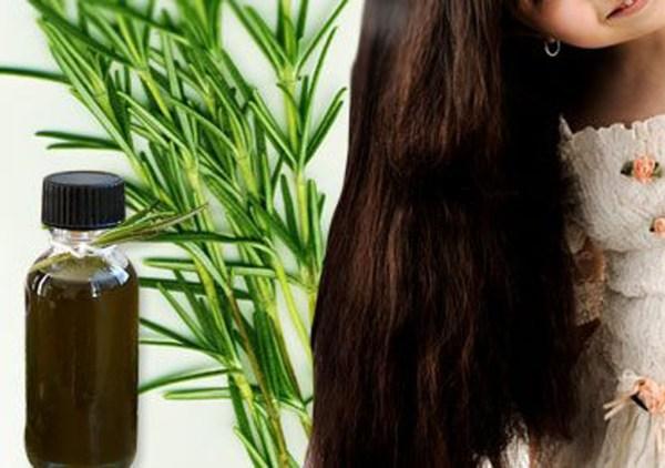 طريقة استخدام مغلي الروزماري لتساقط الشعر