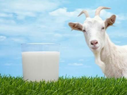 Photo of فوائد حليب الماعز للأطفال الرضع