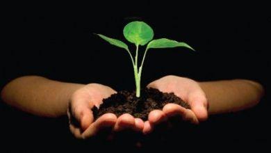 Photo of ما هي عناصر التوازنات الطبيعية وأثرها