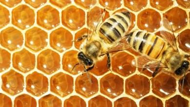 Photo of طرق الكشف عن العسل المغشوش