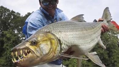 Photo of أكثر الأسماك توحشاً  .. لن تنزل الماء بسببها