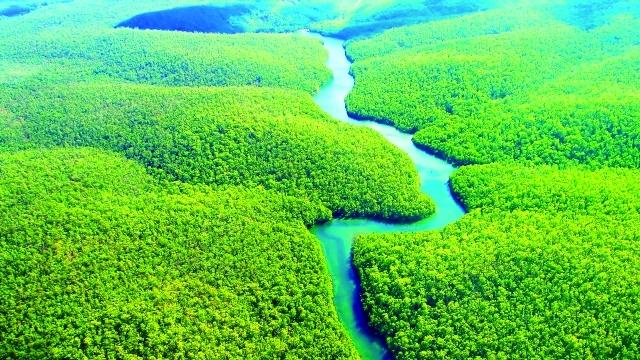 غابات الامازون الممطرة