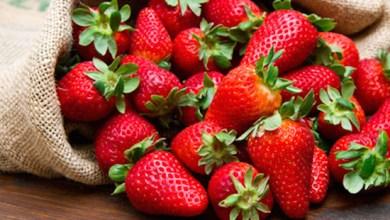 Photo of فوائد الفراولة للصحة
