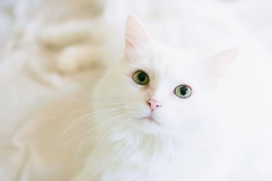 تربية القطط في المنزل