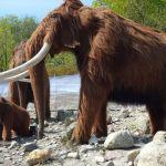قصة حيوان الماموث المثيرة