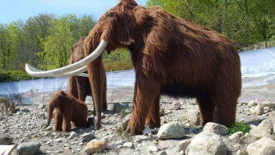Photo of قصة حيوان الماموث المثيرة