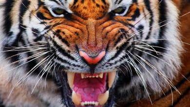 Photo of أخطر الحيوانات في العالم