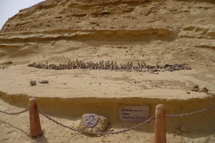 متحف الحفريات بوادي الحيتان