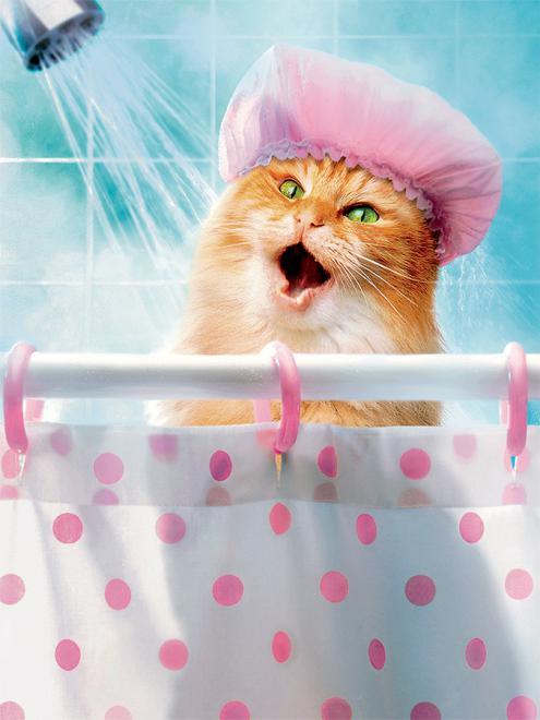 صور استحمام القطط
