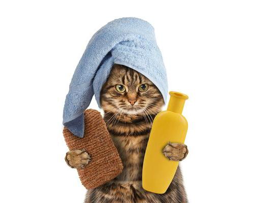 طريقة استحمام القطط Shower cats