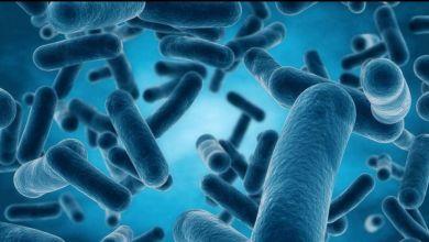 Photo of الفرق بين البكتيريا النافعة والضارة ودور كلا منهما