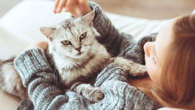 Photo of هل تؤثر تربية القطط على الحمل؟