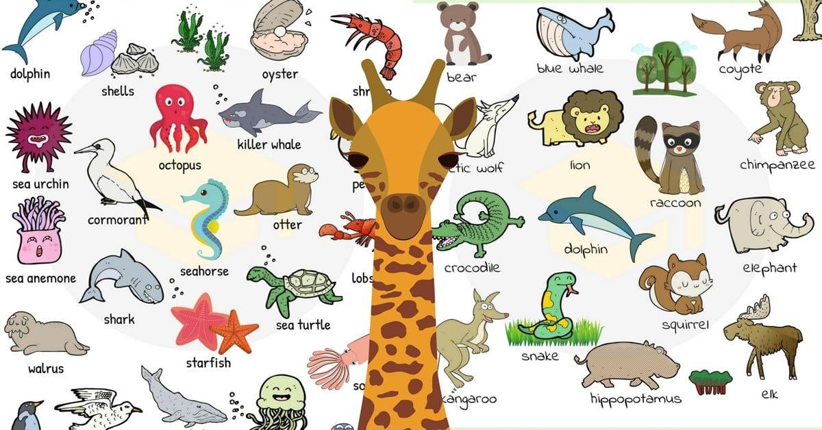 صور اسماء الحيوانات و الطيور و الاسماك بالأنجليزي