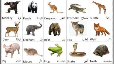 Photo of اسماء الحيوانات بالانجليزي مع الصور