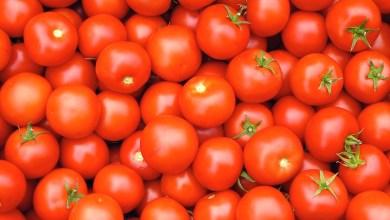 Photo of تفسير حلم الطماطم في المنام
