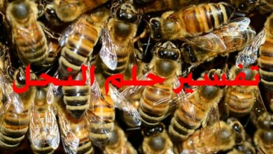 Photo of تفسير حلم النحل