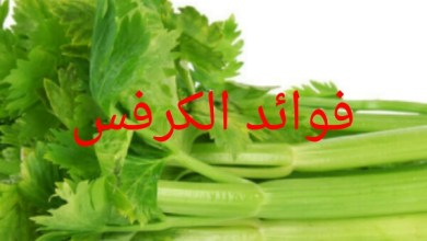 Photo of فوائد الكرفس
