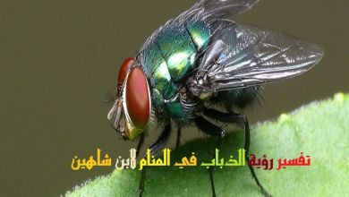 Photo of تفسير حلم الذباب