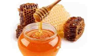 Photo of علاج جرثومة المعدة بالعسل