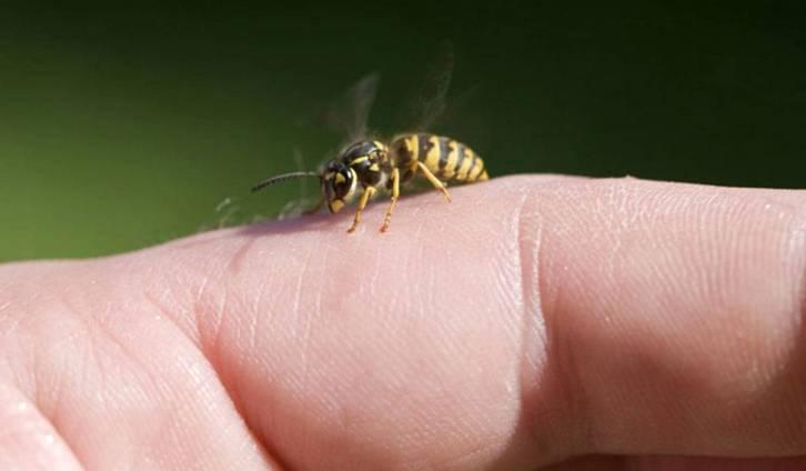 علاج لسعة النحل للمفاصل