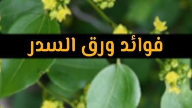 Photo of فوائد السدر للشعر
