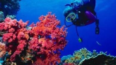 Photo of فوائد المرجان