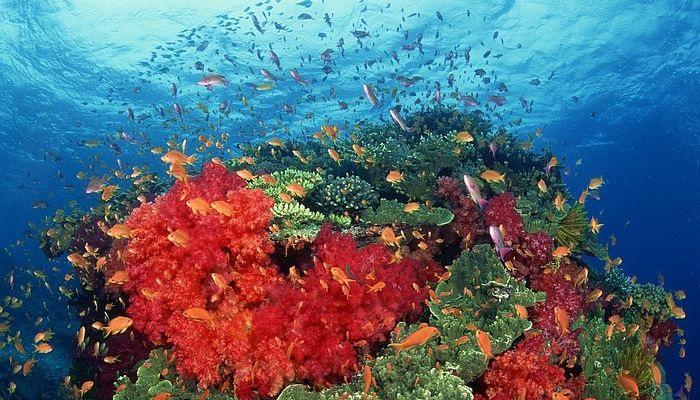 فوائد المرجان