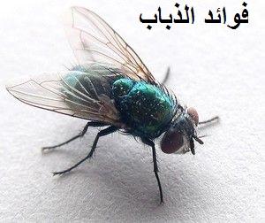 Photo of فوائد الذباب