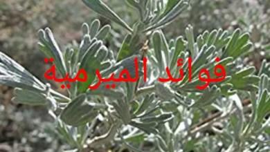 Photo of فوائد الميرمية
