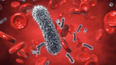 Photo of علاج بكتيريا الدم بالأعشاب