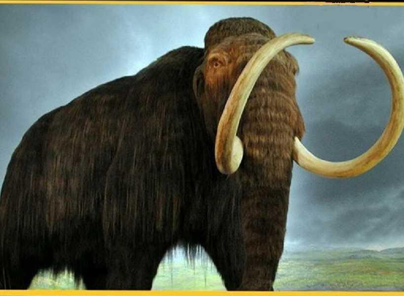 تفسير حلم الفيل للشاب